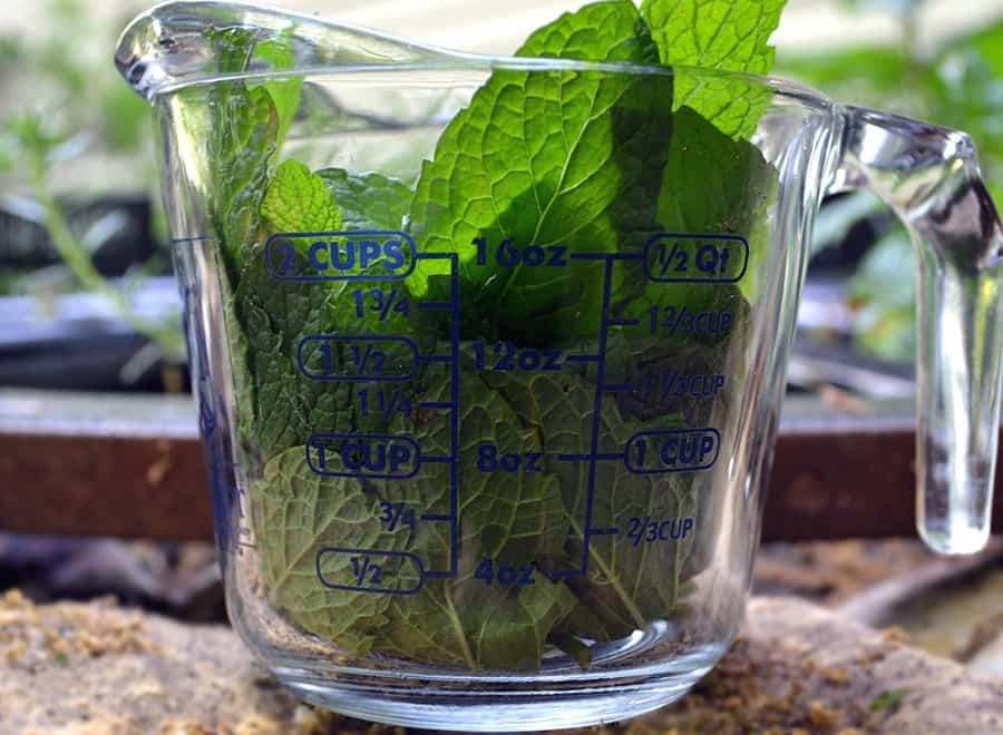 Making Tea with Fresh Picked Mint - PA Dutch Meadow Tea - Amish/Mennonite Fresh Mint Iced Tea - Lancaster County - craftycookingmama.com