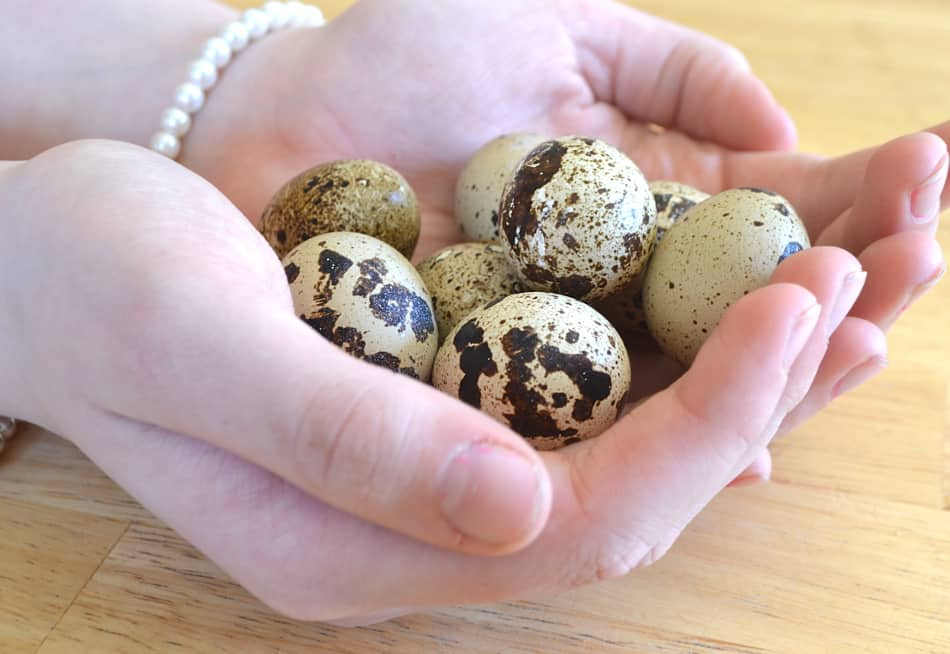 All about Quail Eggs | www.craftycookingmama.com